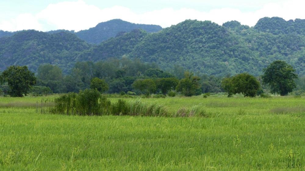 langkawi-rice-farm-02.jpg