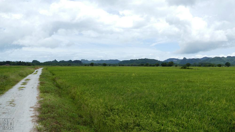 langkawi-rice-farm-03.jpg