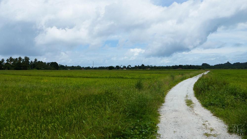 langkawi-rice-farm-07.jpg