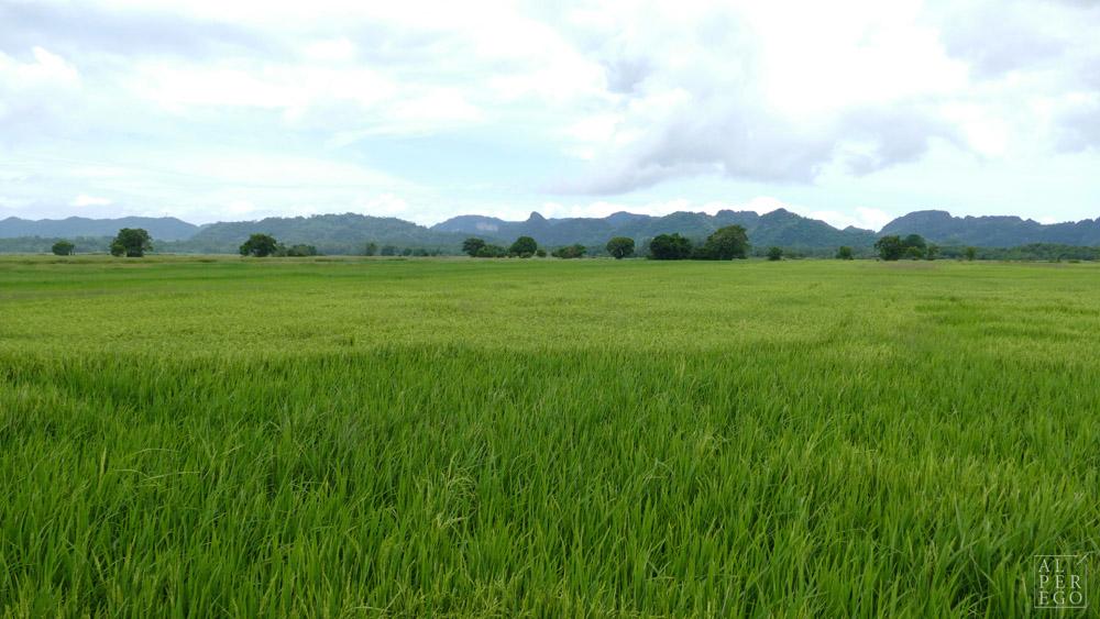 langkawi-rice-farm-08.jpg