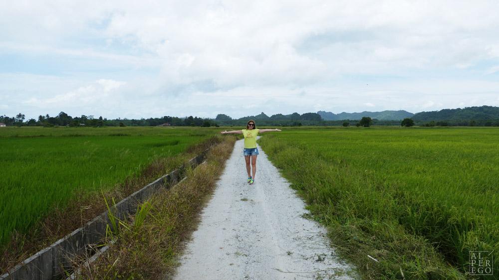 langkawi-rice-farm-10.jpg