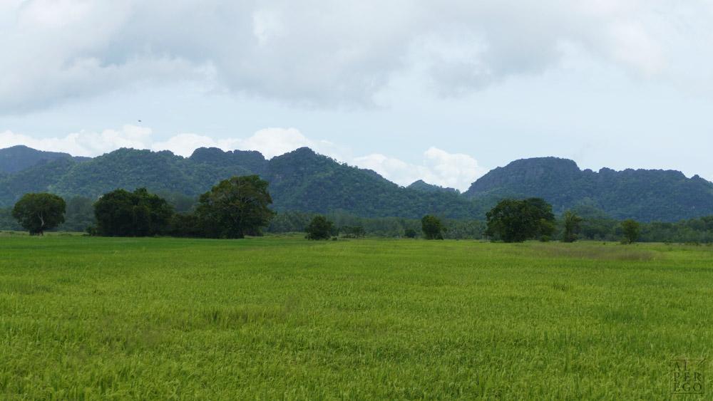 langkawi-rice-farm-09.jpg