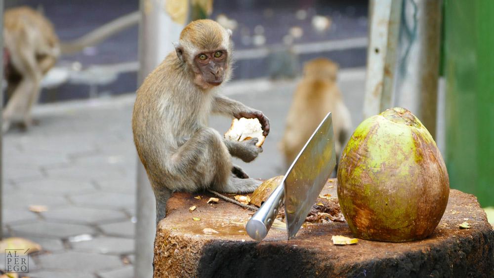 batu-caves-05-monkey.jpg