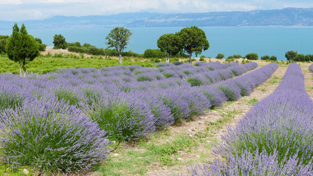 lavender-gardens-01.jpg