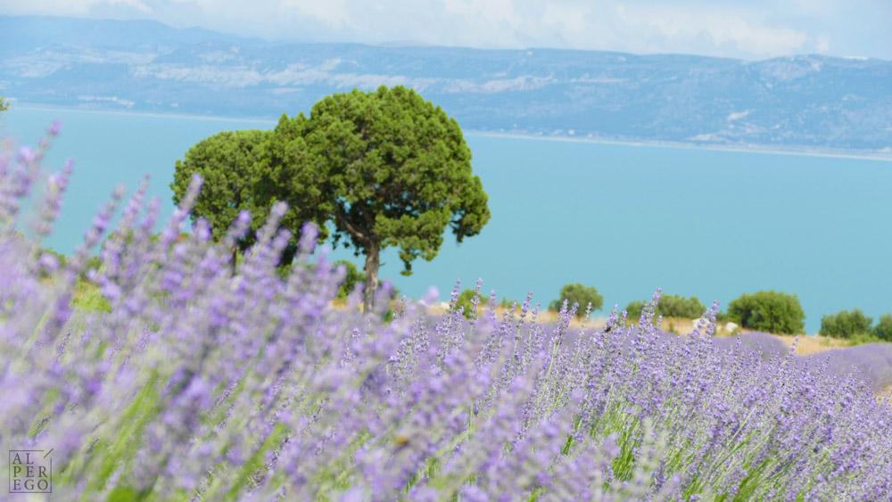 lavender-gardens-03a.jpg