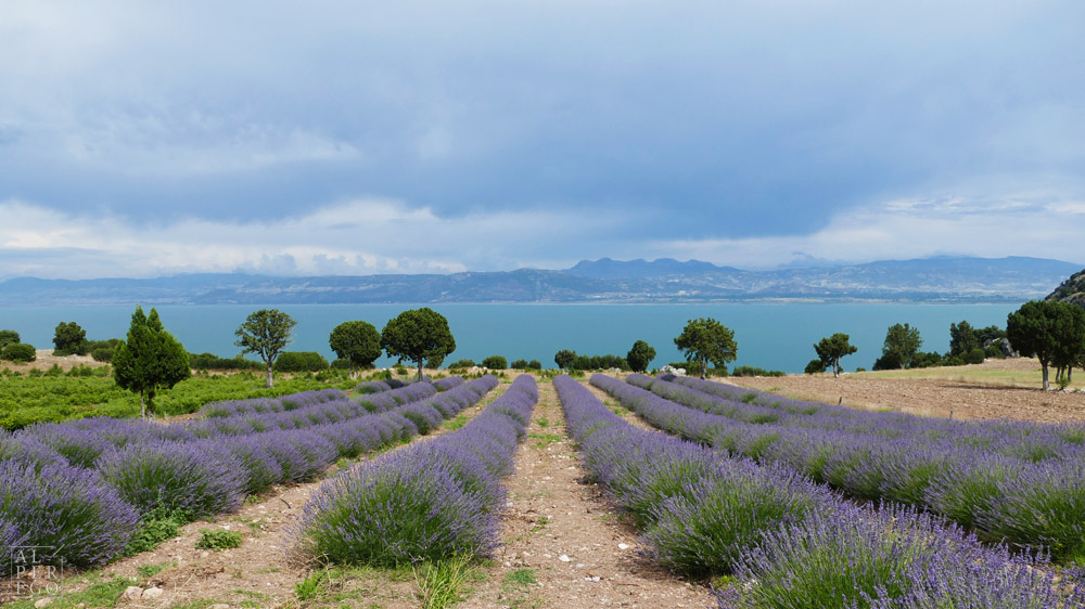 lavender-gardens-03b.jpg