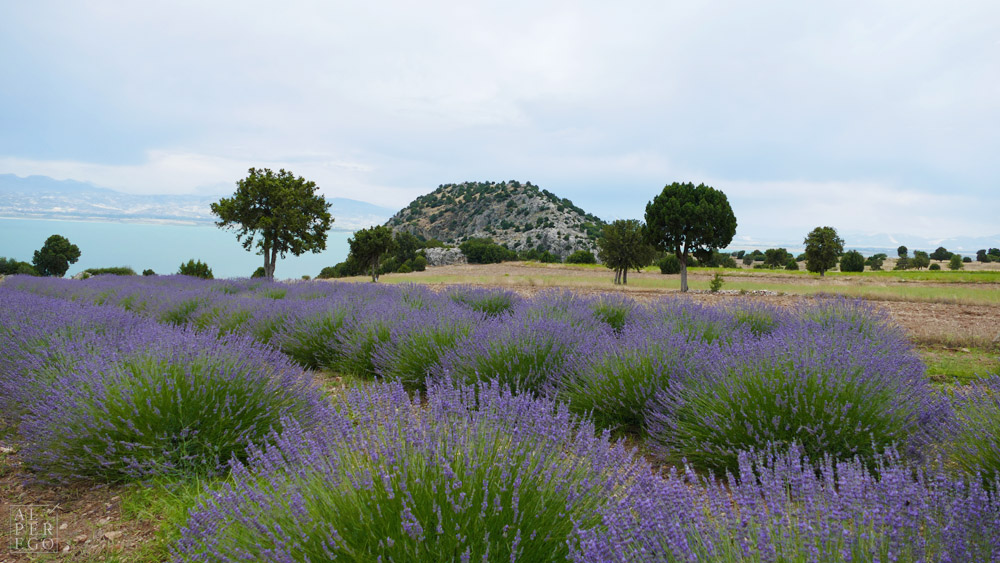 lavender-gardens-04.jpg