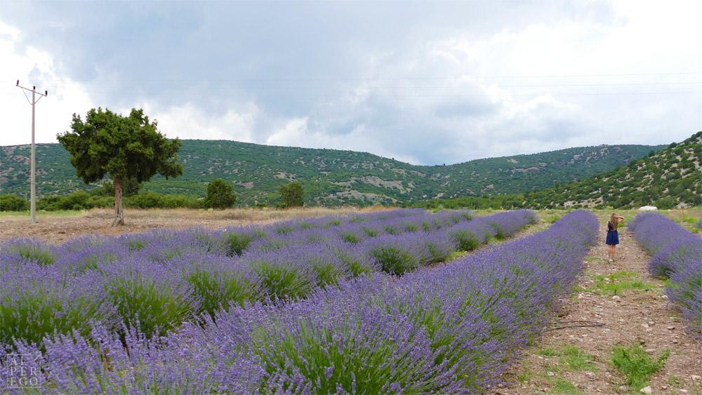 lavender-gardens-05.jpg