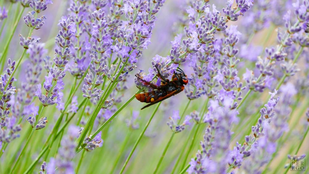 lavender-gardens-07.jpg
