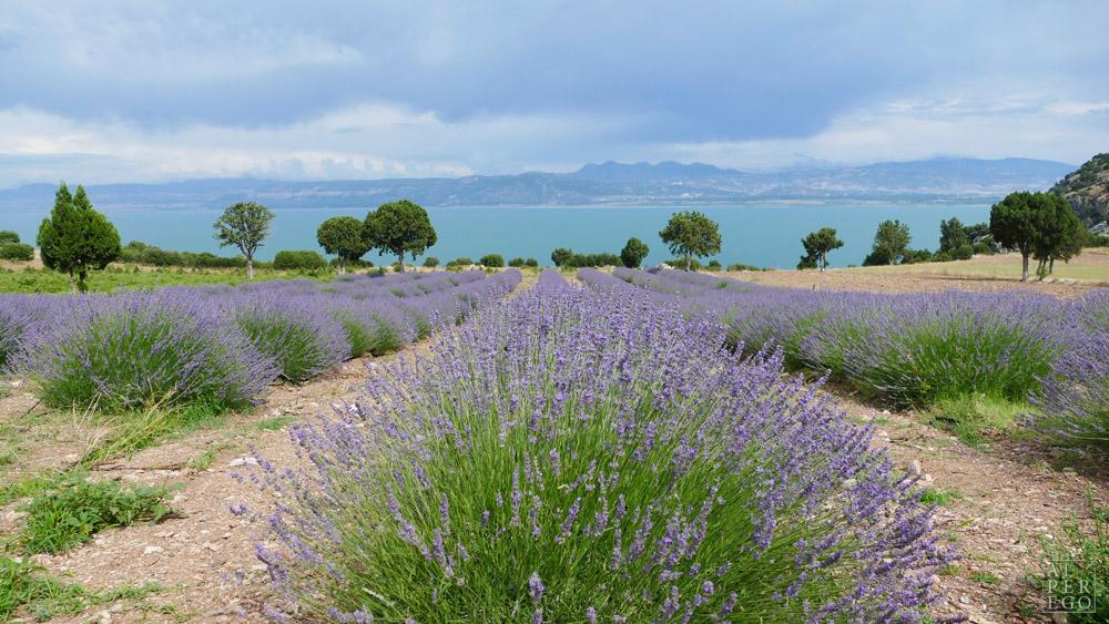 lavender-gardens-08b.jpg