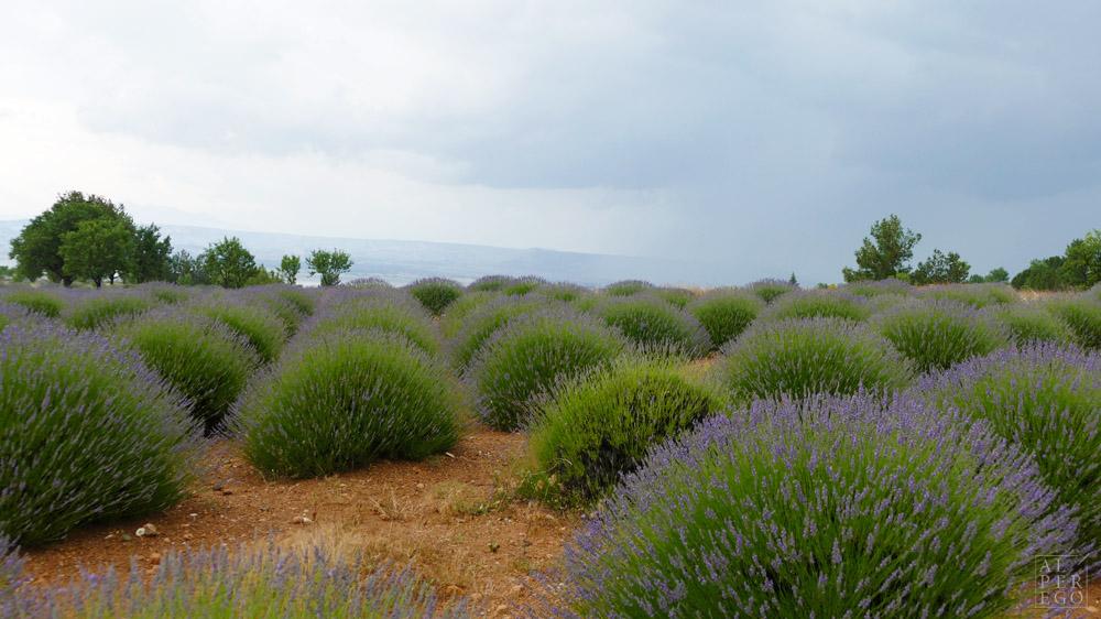 lavender-gardens-10.jpg