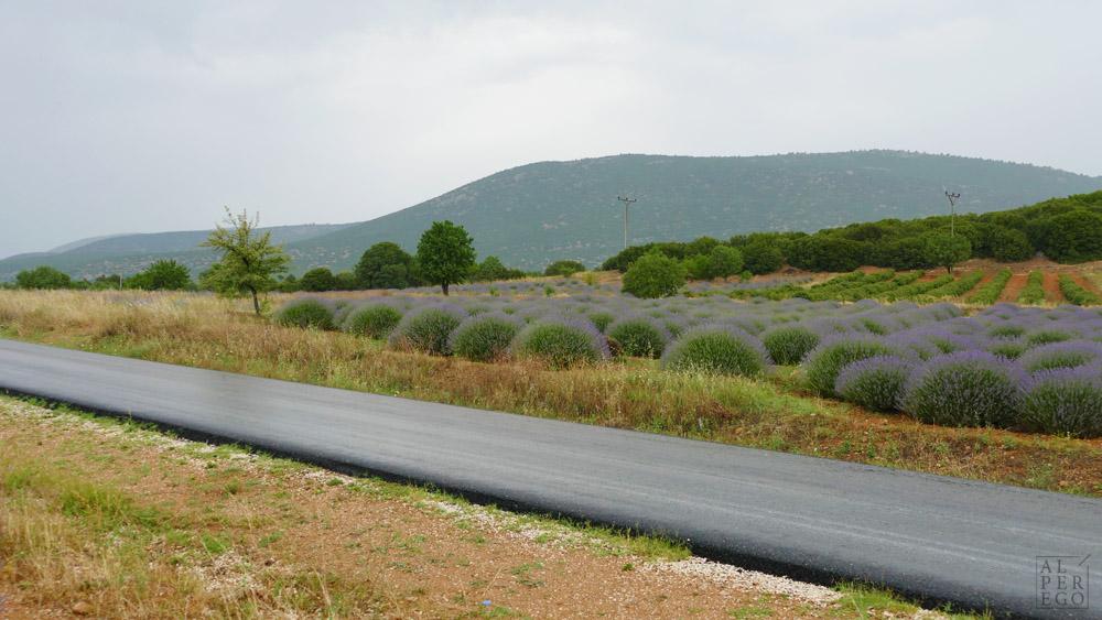 lavender-gardens-11.jpg