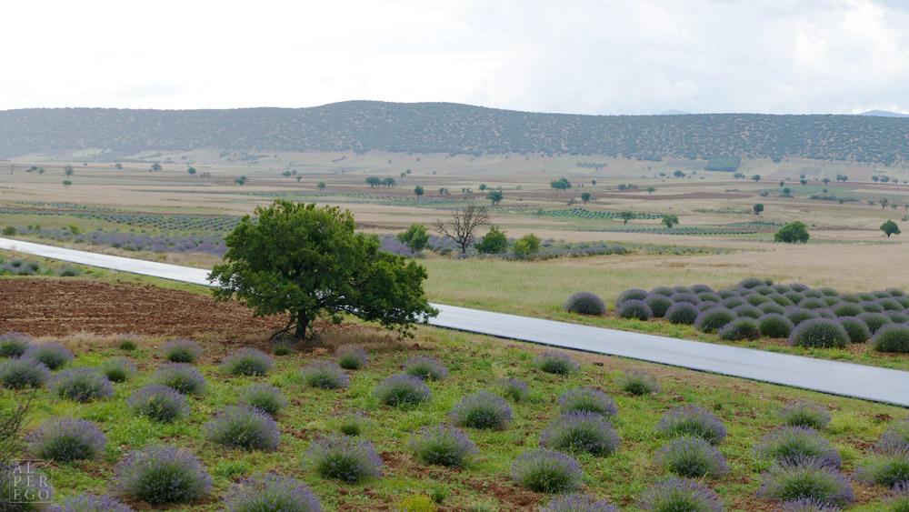 lavender-gardens-17.jpg
