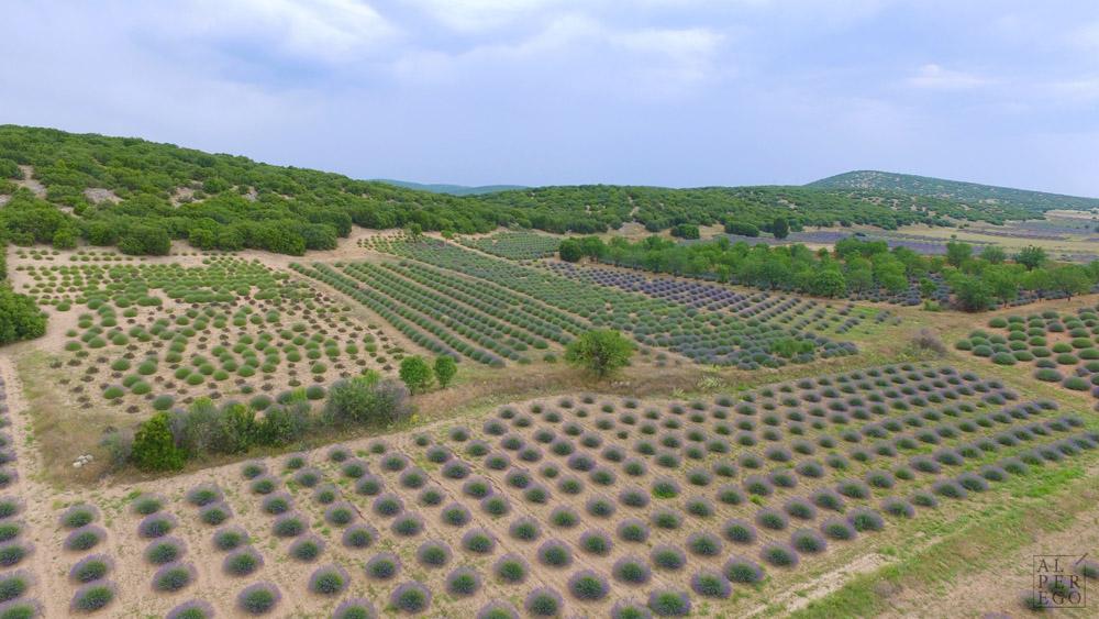 lavender-gardens-18.jpg