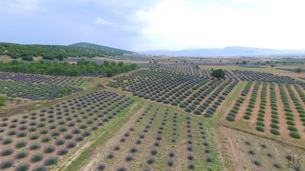 lavender-gardens-19.jpg
