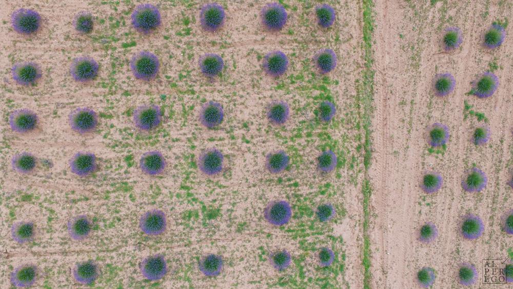 lavender-gardens-20.jpg