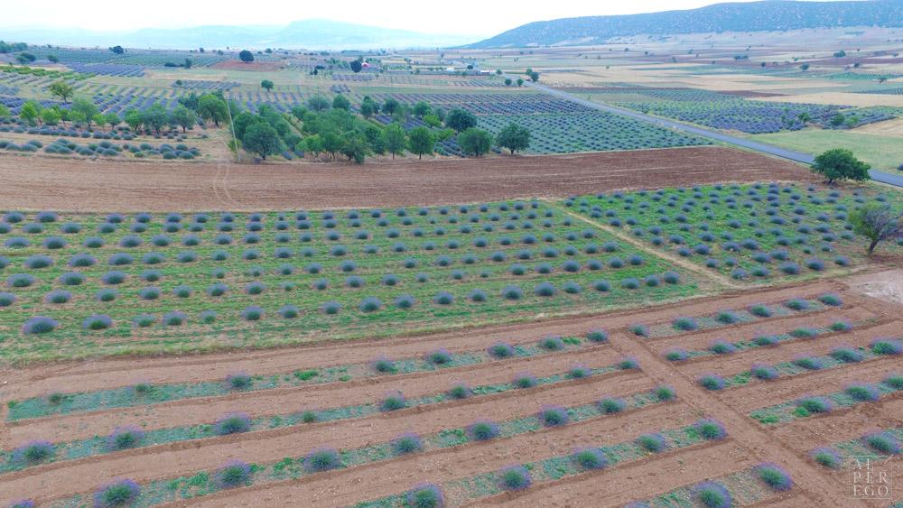 lavender-gardens-21.jpg