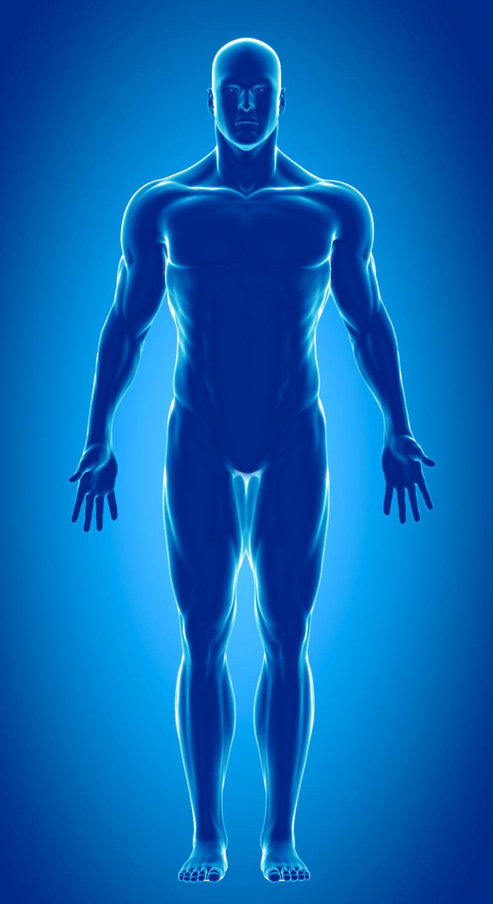 Skeleton .jpg