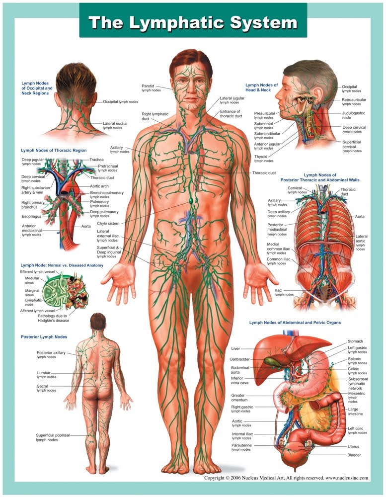 Manual Lymph Drainage Hohl Hearted Healing Llc