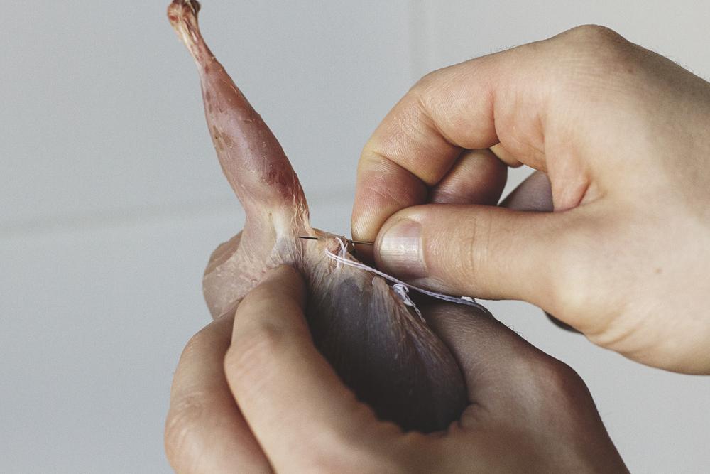sewing-a-quail.jpg