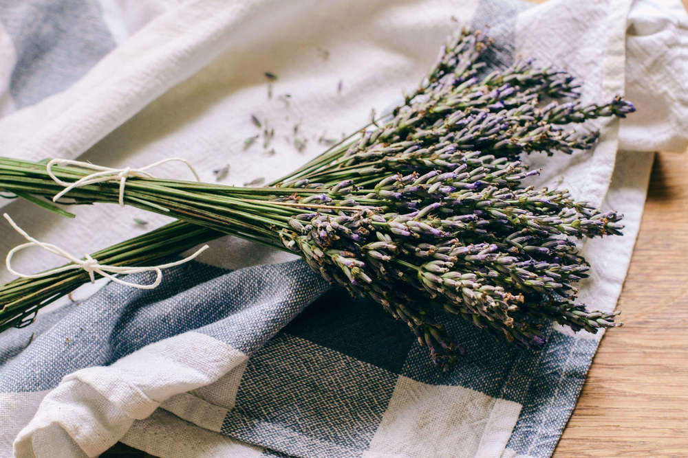 La Petite Californienne: Fresh French Lavender