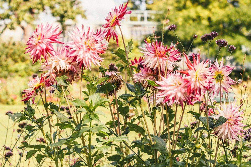 La Petite Californienne: The flowers at Jardin des Serres d'Auteuil