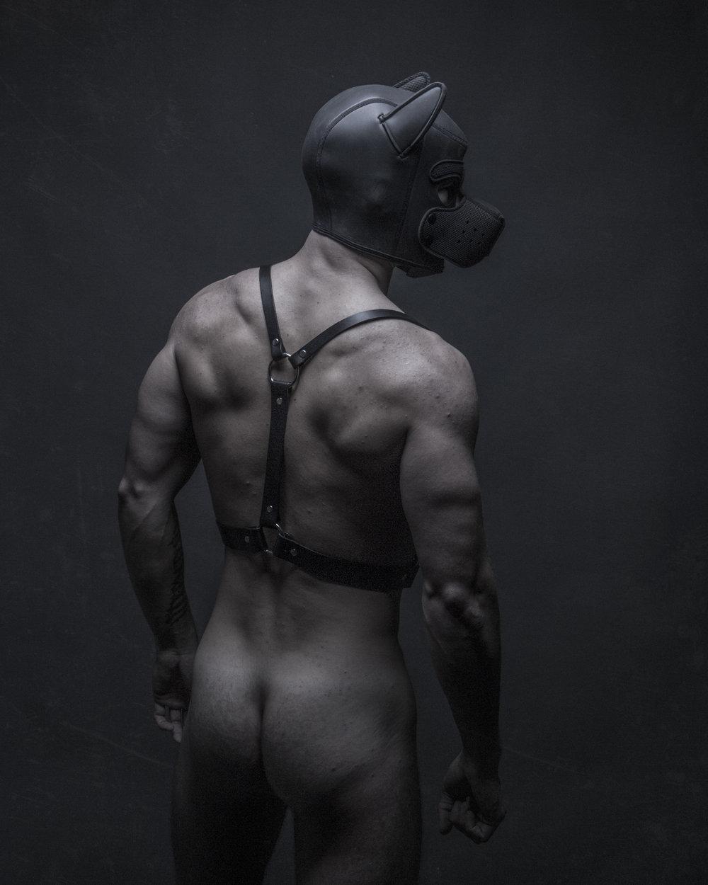 LeatherPUP.jpg