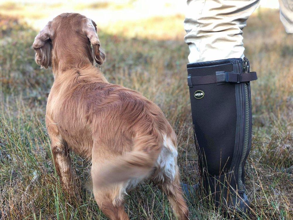 Selvom du bare ønsker jakte med din spaniel er Jal et minimum av hva du trenger for å ha en positiv jakt opplevelse med hunden din.