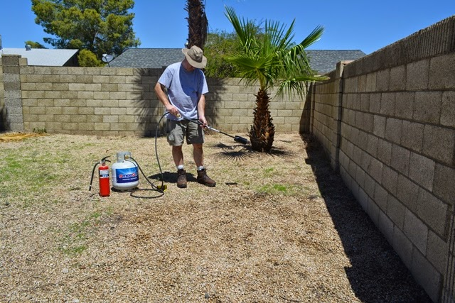 Weed Killing - Taking a flame thrower to this place! — AZ DIY Guy