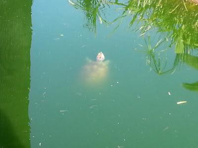 Swimming on Dagobah