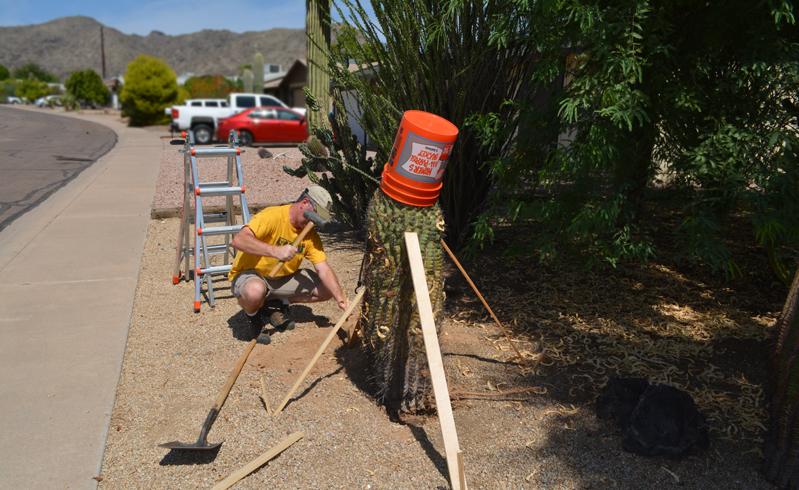 Cactus Down!