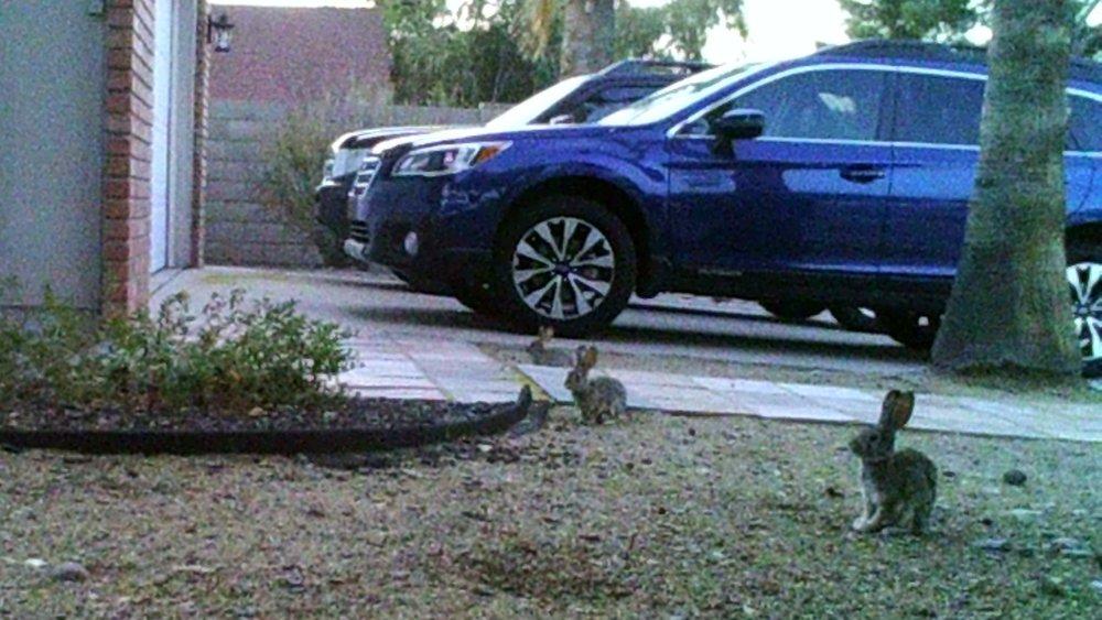 bunnies5.jpg