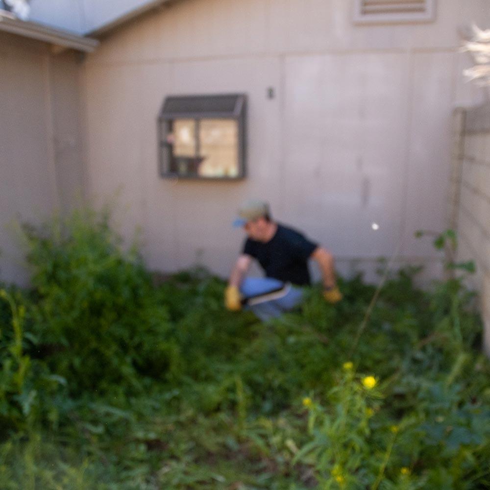 machete-weeds-4.jpg