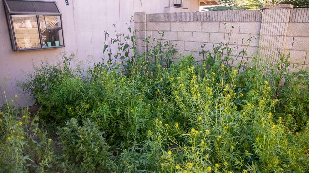 3-overgrown-patio.jpg