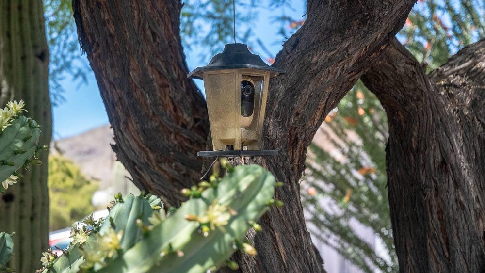 Exclusively camera hidden in a cactus