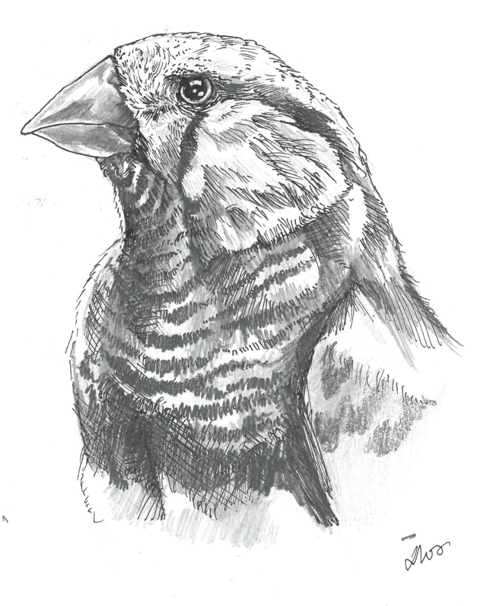 Capturebird2.PNG