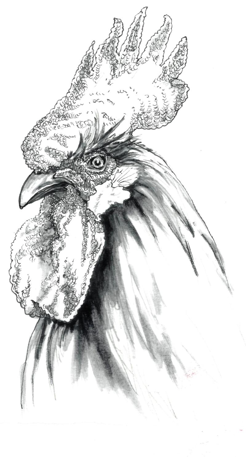 CaptureRooster.PNG
