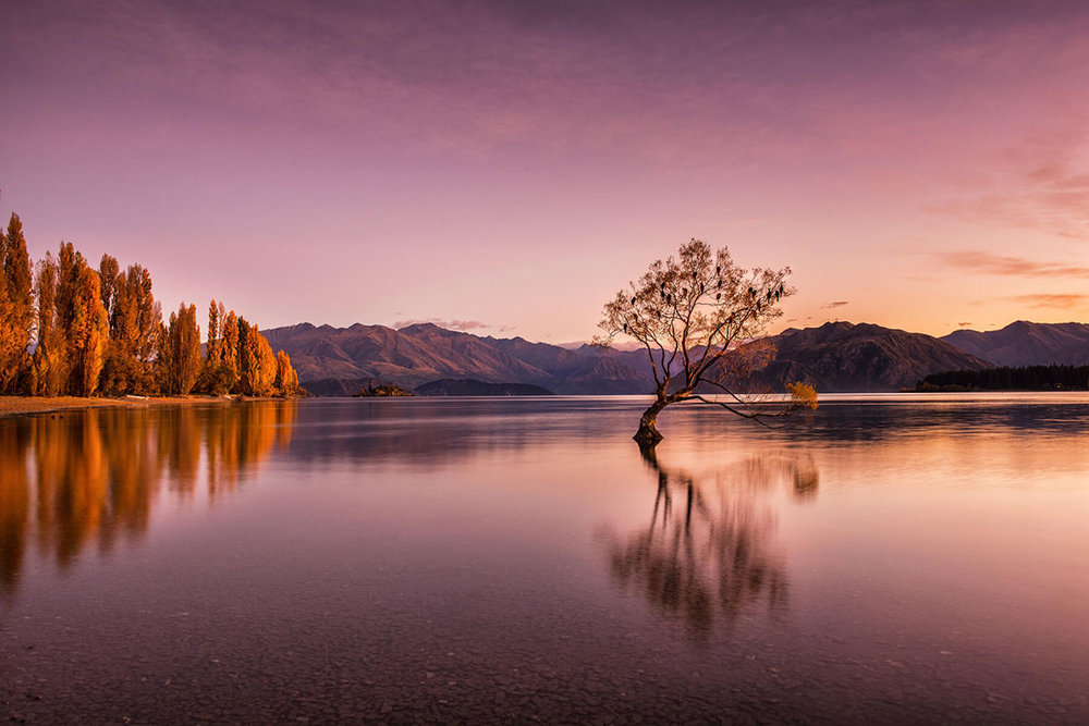 The Lone Willow, Autumn Twilight