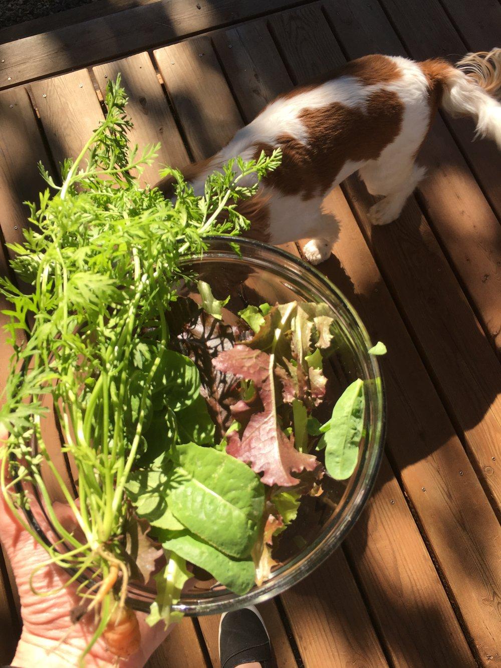 Goal 6   grow 25 pounds of food