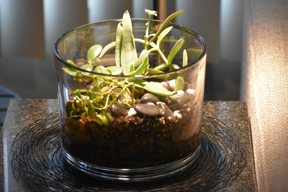 Terry the terrarium