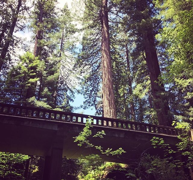 Where is your favorite place on Earth? I still have a lot of traveling to do, but mine so far is the Redwoods! #gallivanting #gallivantinggal