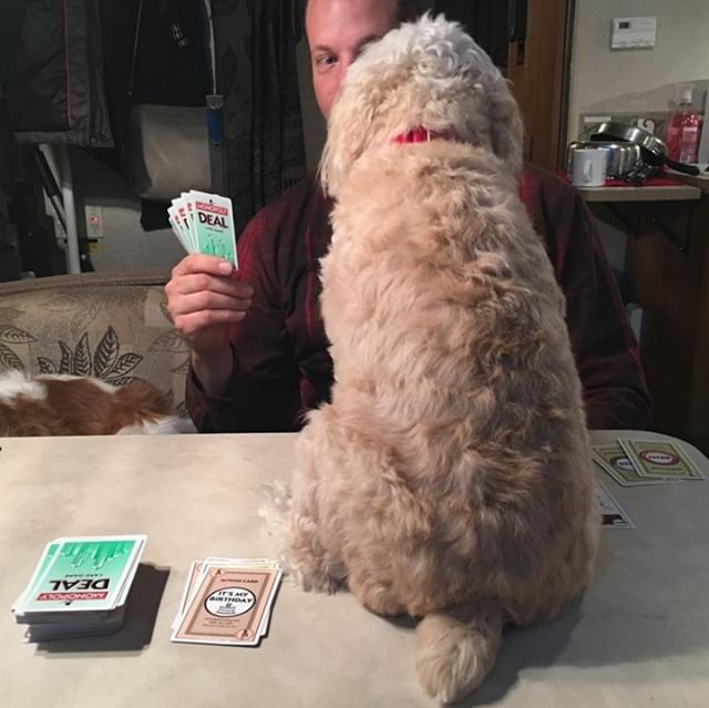 Monopoly Deal is a great way to pass an hour or four while camping! So much so that your dog may have to tell you that it's time to call it a night. It's on my list of motorhome essentials. What's on yours? . . . . . #motorhomelife #motorhomes #motorhomeadventures #motorhometrip #funontheroad #rvtrip #rvcampingtrip #rvtrips #rvcamping #rvcamp #motorhometravel #motorhometravels #monopolydeal #cardgames #cardgamesarefun #cardgames #familygamenight #familygamenights #rvlife