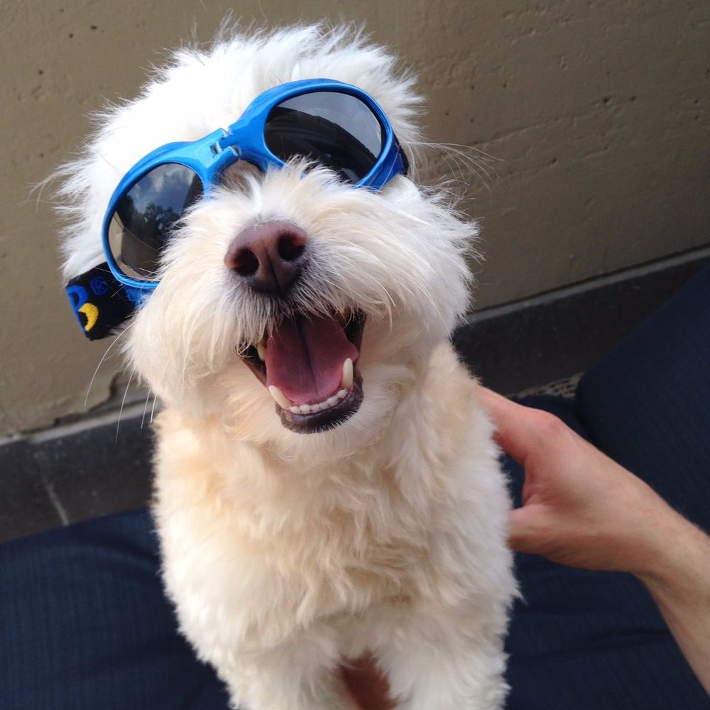 Thor in swim goggles