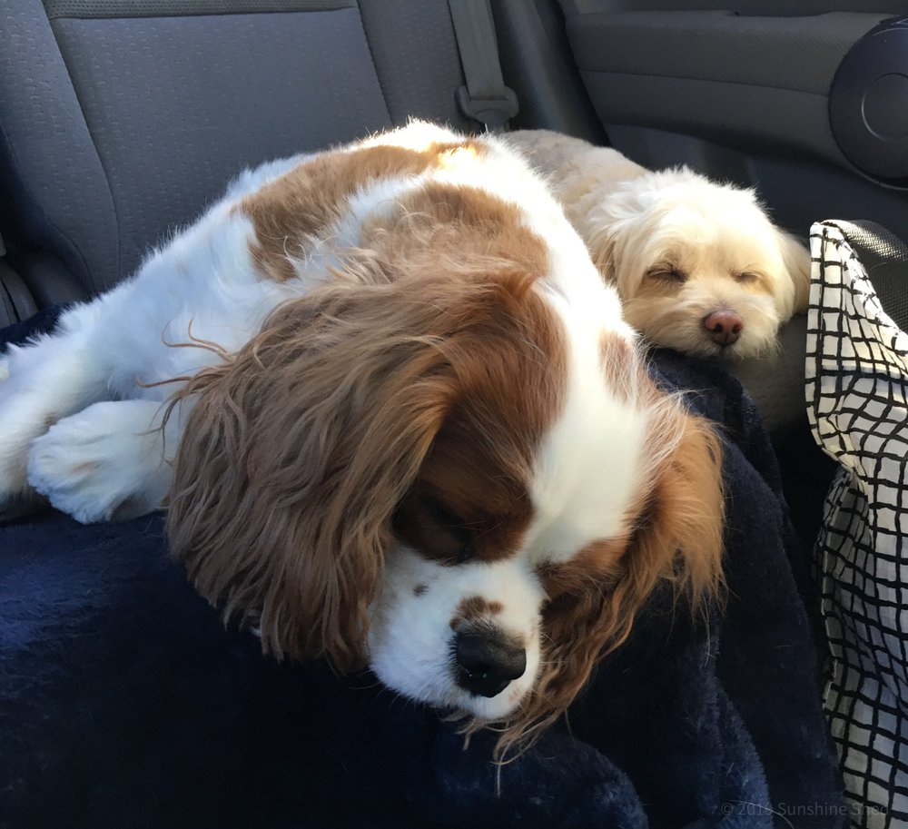 The only thing these dogs love more than barking is going on a road trip!