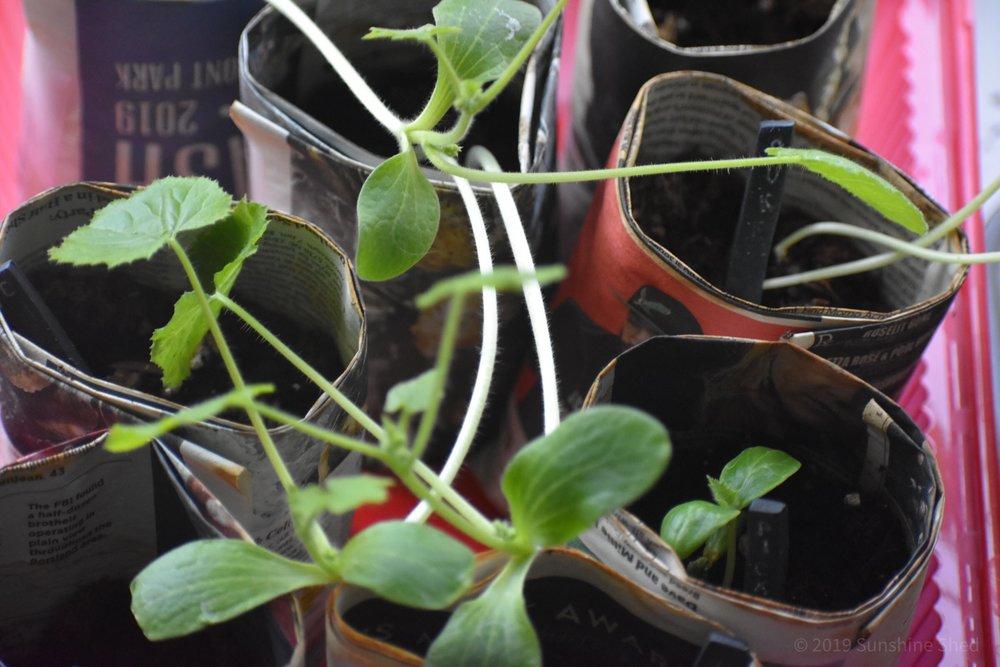 Baby plant starts