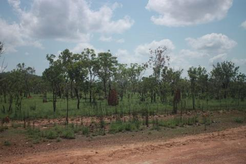 Changing treescape, with more small trees. Note the termite mounds.