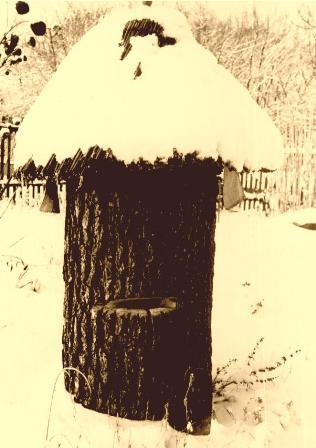Simple form of Klotzbeuten - a beehive in a tree trunk