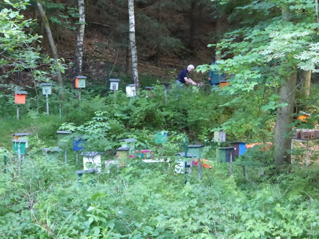 German beekeepers tending mating nuclei in the traditional queen bee mating station at Gehlberg, Thuringia, Germany (see Inside article 'Visit to a German Belegstelle'