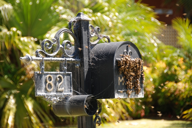 It's that time of the year again! A swarm collects in a letterbox on the NSW South Coast. Bet the postie loved delivering The ABK to that address! Photo courtesy Robyn Alderton