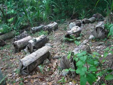Apiary of log hives in Haiti - see article 'Haitian Beekeeping' inside this issue Photo courtesy Bo Sterk